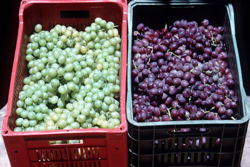 Compra una fruta en el mercado y te diré de qué árbol viene: agricultura sostenible