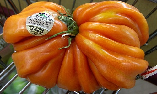Ugly food leads to innovation in fighting hunger