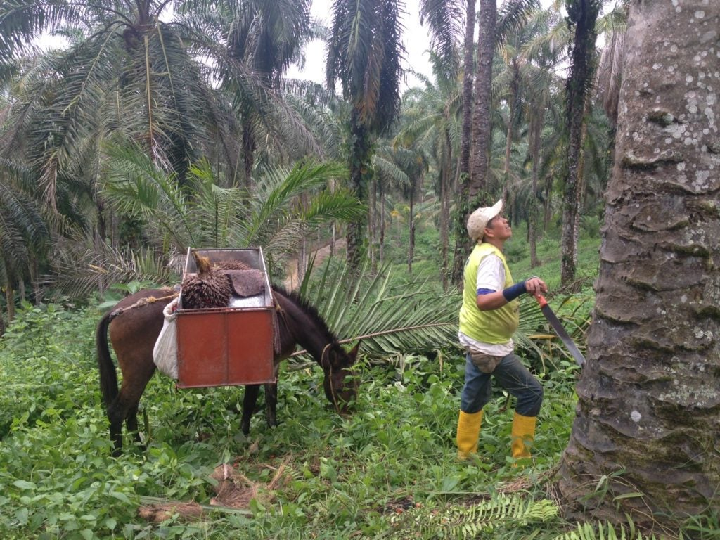 Six Takeaways on the Growth of Palm Oil in Latin America