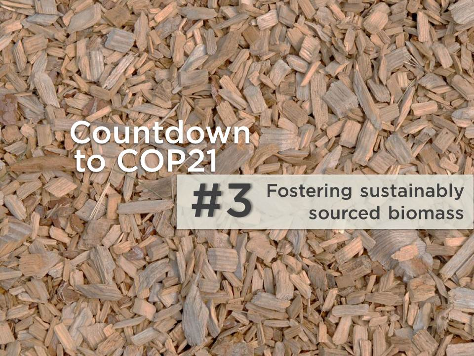 5 reasons to rethink biomass in Latin America