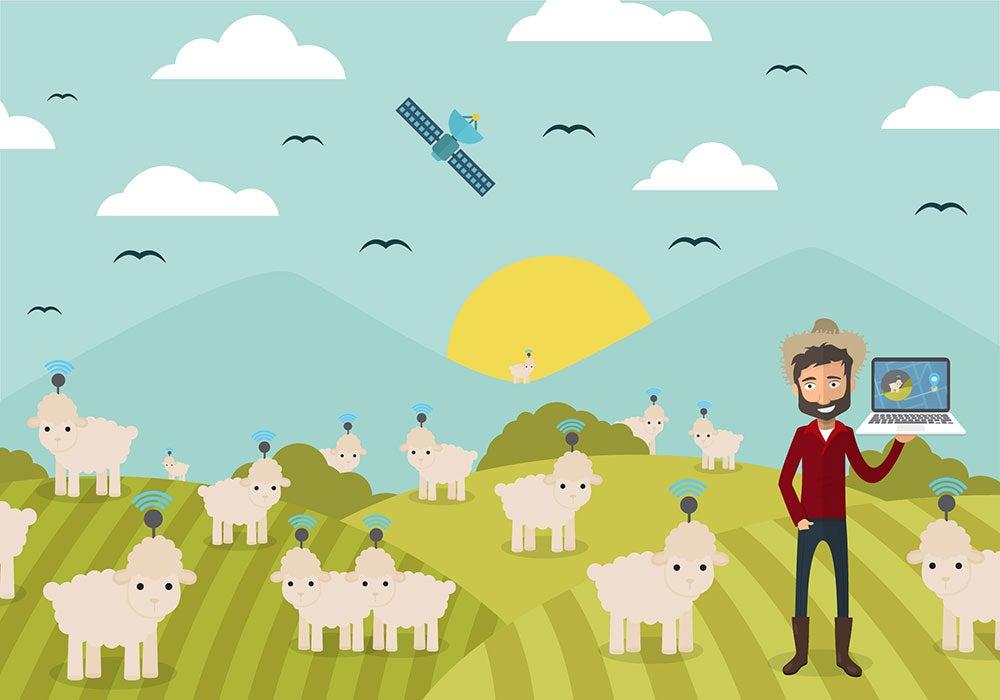 """¿Se vienen las ovejas """"techies"""" en Patagonia?"""