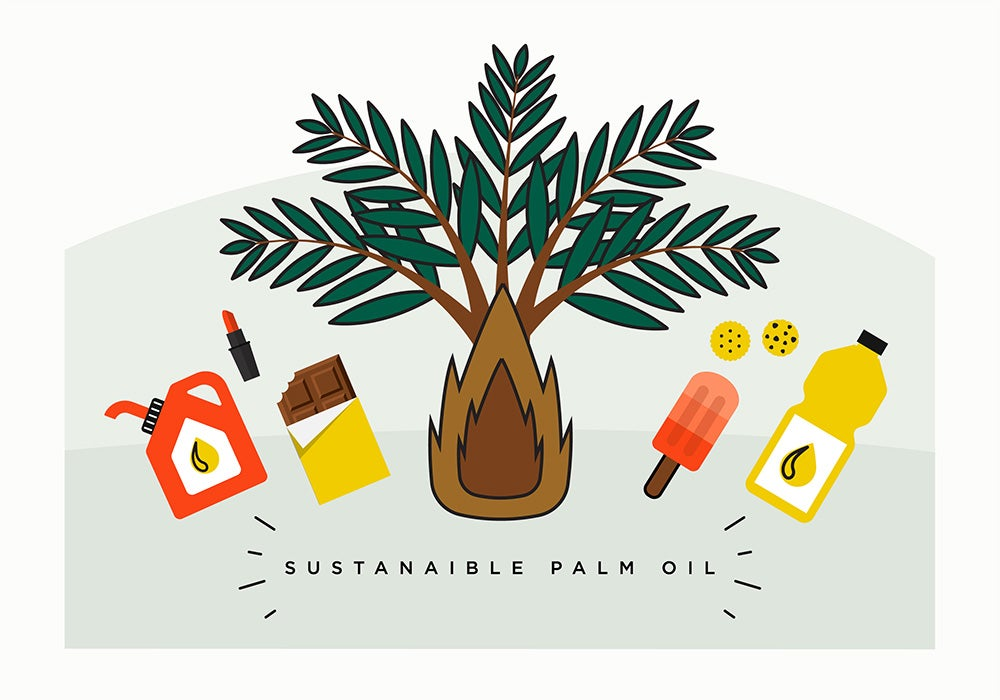 Supporting sustainable palm oil in Latin America and the Caribbean