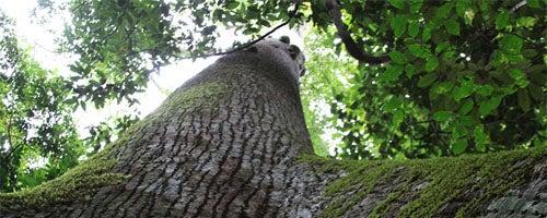 AmazonFACE: que impacto as mudanças climáticas podem causar nas florestas tropicais?