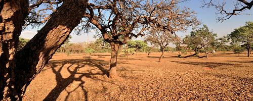 Como a Califórnia enfrenta a pior seca dos últimos 1,2 mil anos?