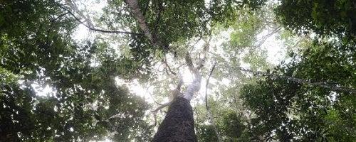 El bosque de los ninõs (O bosque das crianças)