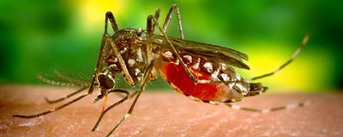 Os 16 pontos acordados para controlar o vírus zika