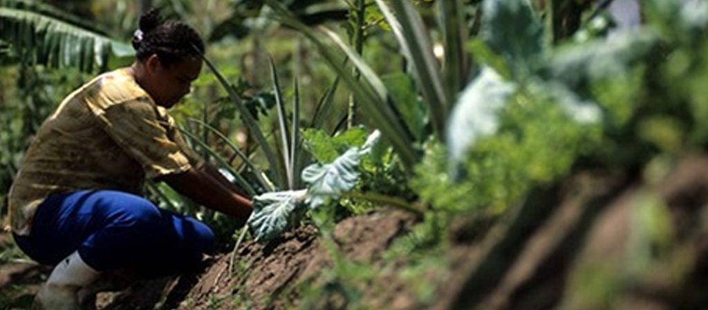 Meio rural: bem além de provedor de alimentos