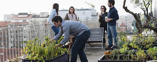 12 benefícios de cultivar hortas urbanas