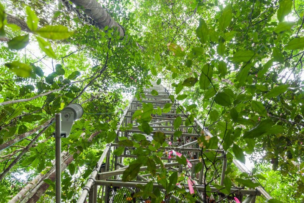 Amazônia e a mudança climática: o futuro no fiel da balança