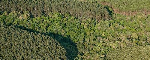 É possível produzir, proteger o meio ambiente e gerar renda ao mesmo tempo?