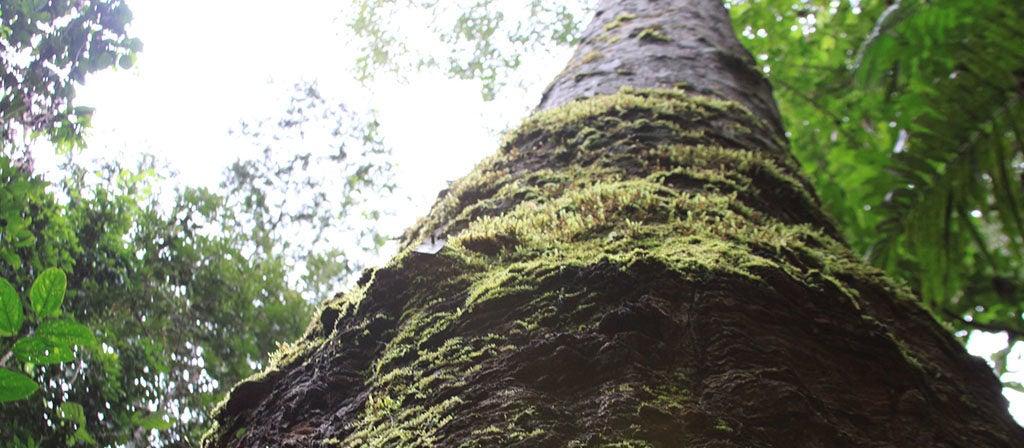 Floresta em pé é sinônimo de emprego e renda