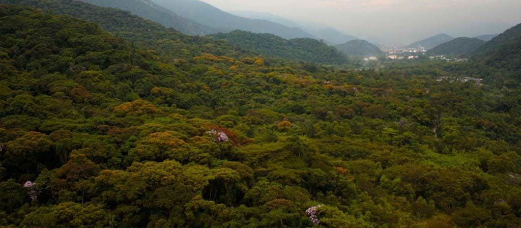 Brasil referência mundial em governança eletrônica ambiental