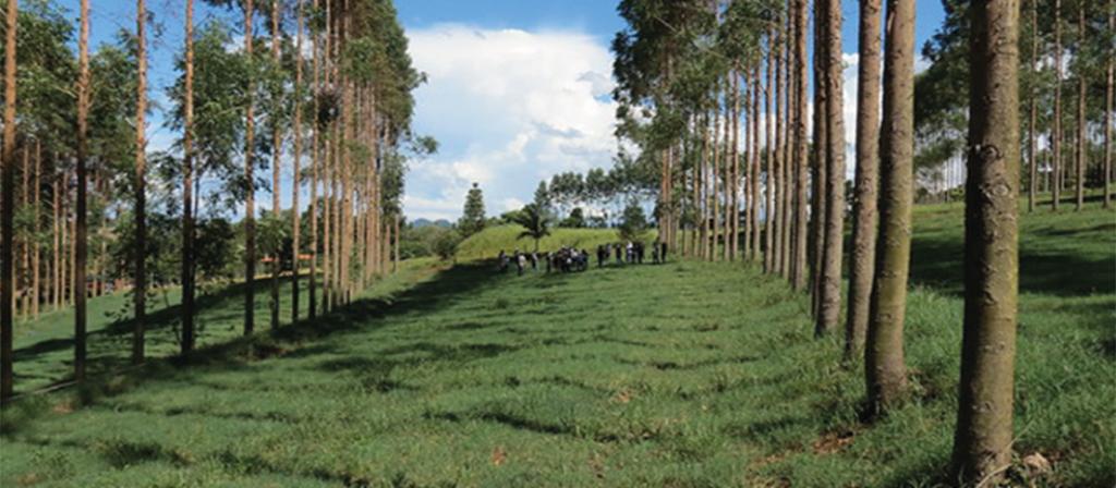 A agricultura de baixo carbono no Brasil pode beneficiar agricultores e conter a mudança climática