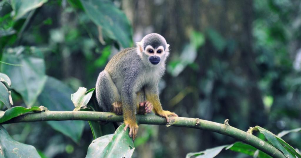 Se não protegermos a biodiversidade teremos mais pandemias?