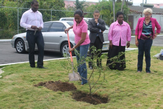The Tree of Life and IDB Pink Campaign