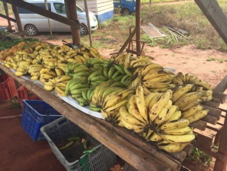 Agricultural Policies in the Caribbean