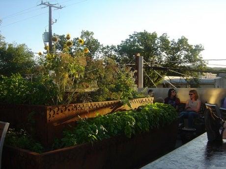 Agricultura Urbana: ¿La ciudad como área de cultivo?