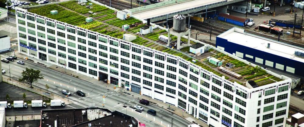 Cómo gestionar un huerto urbano: Brooklyn Grange
