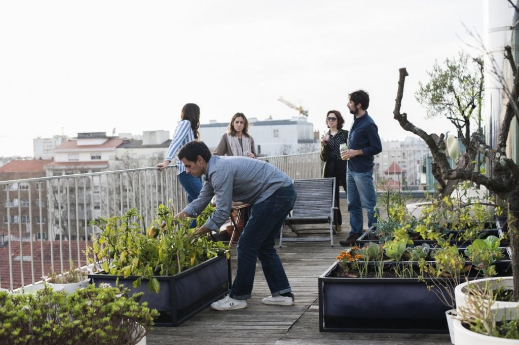 12 beneficios de cultivar huertos urbanos