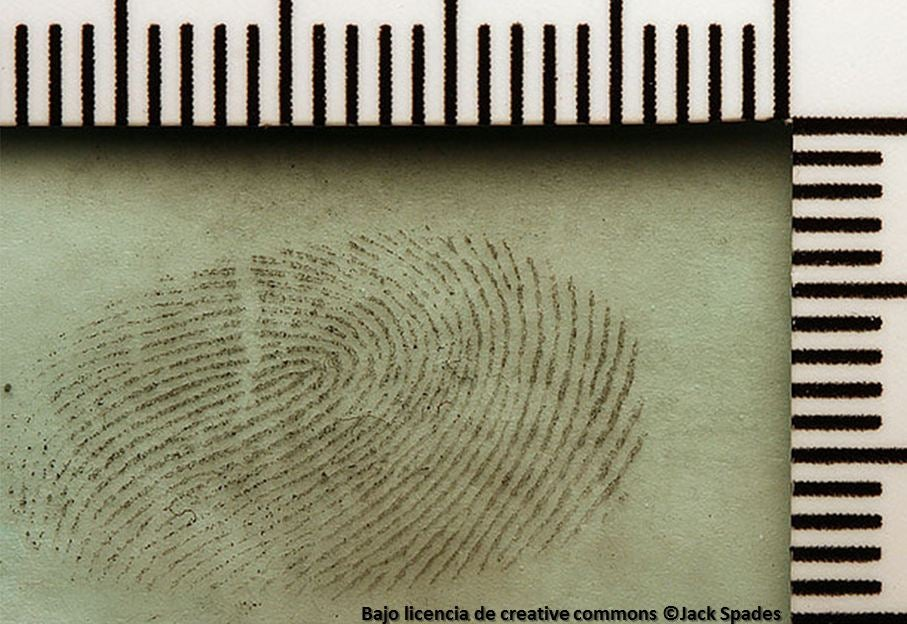 10 principios para la prevención del crimen