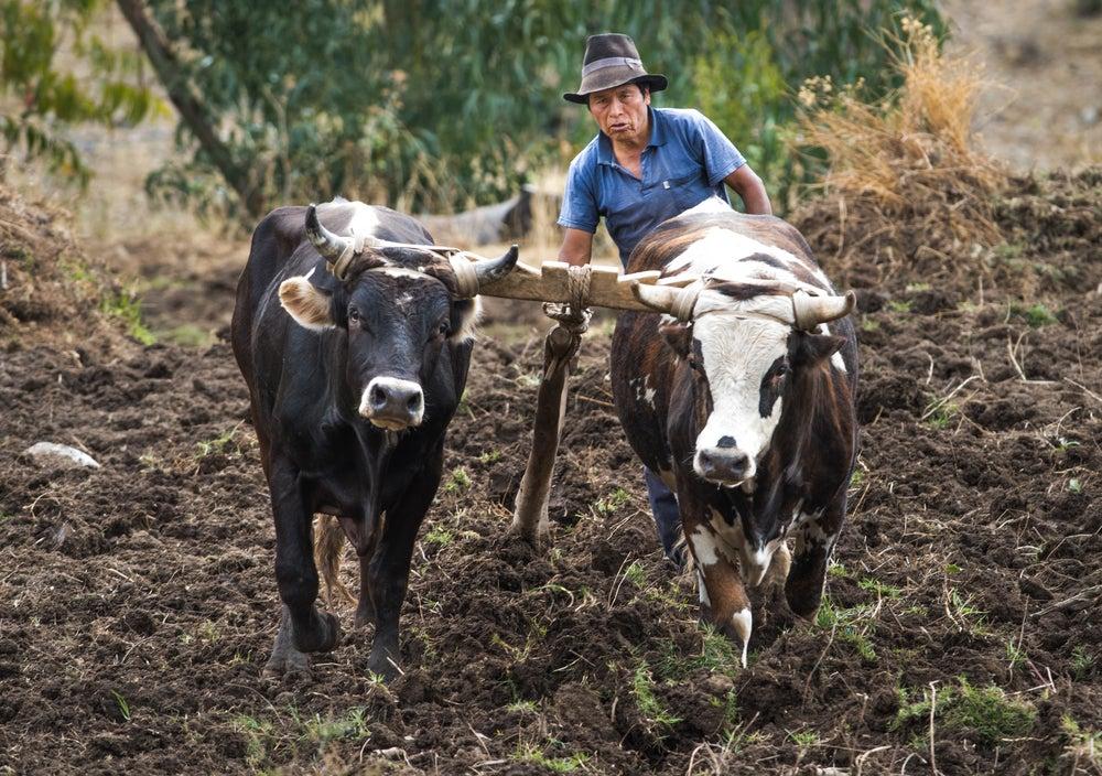 El cambio climático requiere nuevos hábitos agrícolas: ¿Cómo puede ayudar la economía del comportamiento?