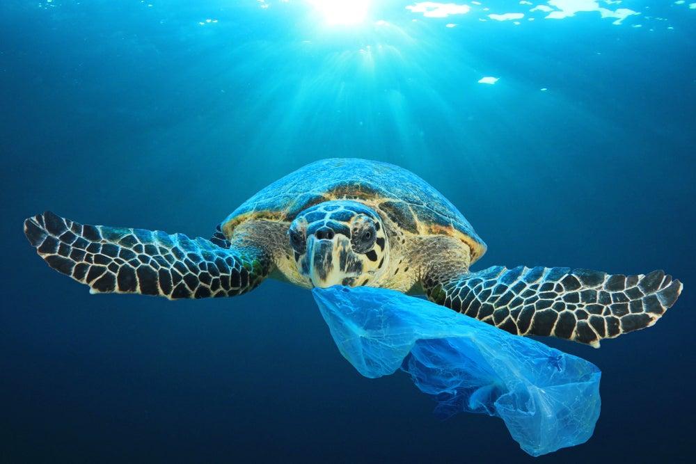 La marea del plástico: cómo ponerle freno