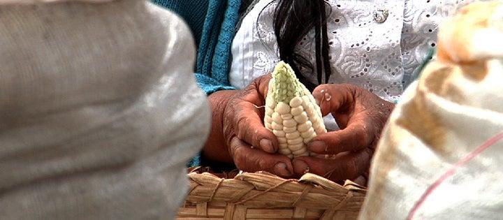 10 formas de incorporar el conocimiento tradicional indígena en la conservación ambiental