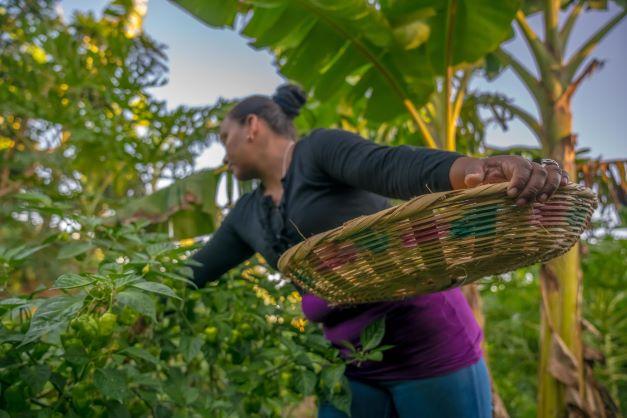 Indigenous woman in crop field