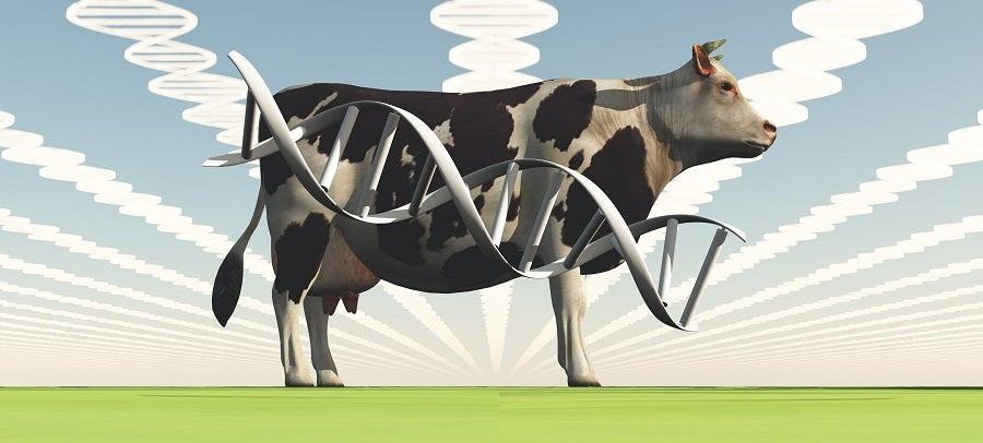 Los nuevos alimentos 4.0 y sus impactos en el comercio