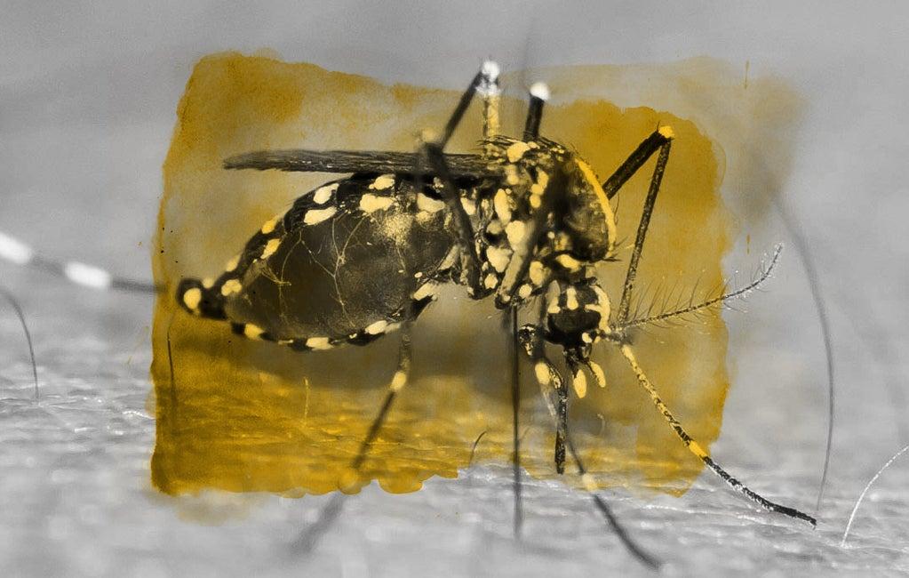 Los mosquitos que afectan a más de 390 millones de personas al año