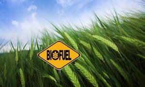 Cómo una mayor demanda de biocombustibles impacta América Latina y el Caribe