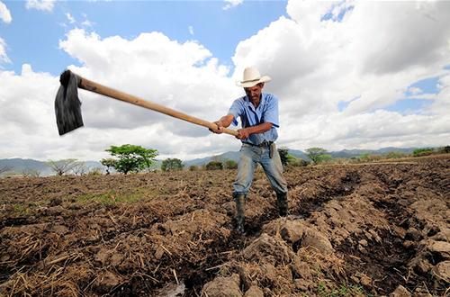 Cómo garantizar la seguridad alimentaria en tiempos de cambio (climático)