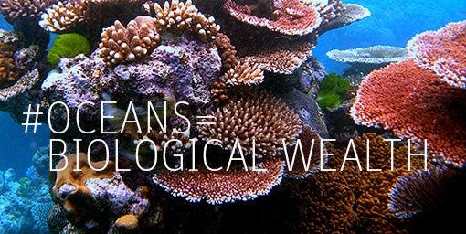 Siete razones para celebrar el día mundial de los océanos