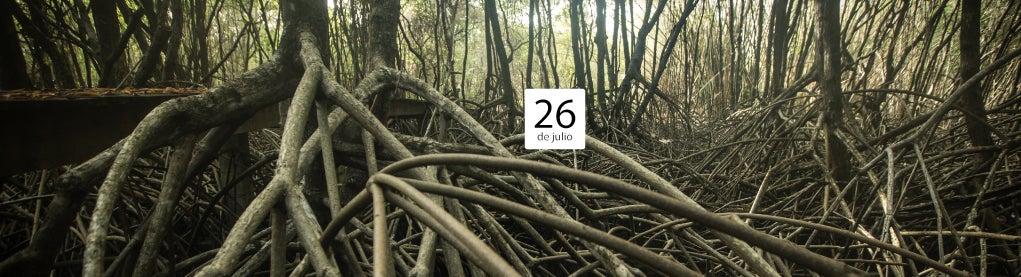 Cinco razones para amar (y proteger) los manglares