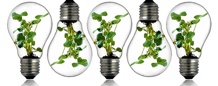 Five innovations based on biodiversity
