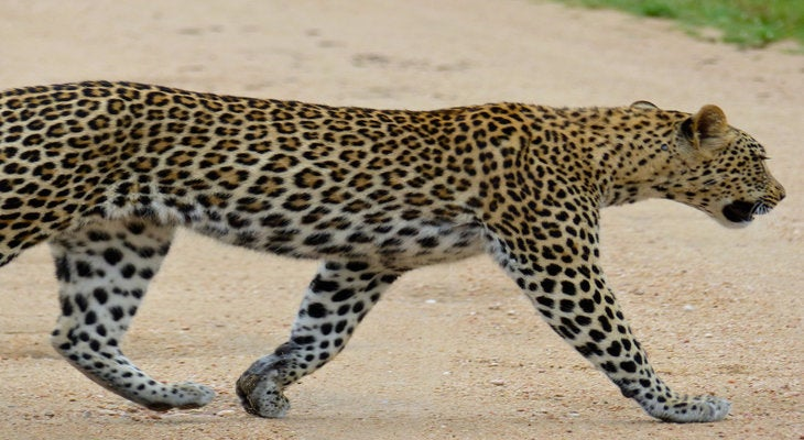 A road through the kingdom of the jaguar