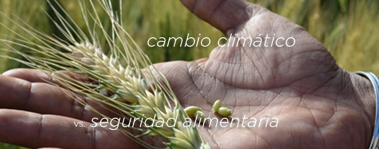 3 ways climate change affects food security