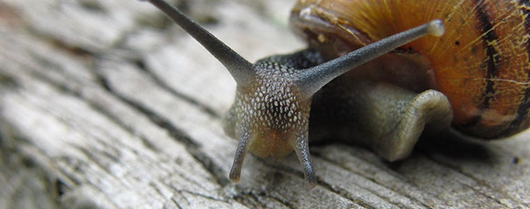 What do snail soup and climate change have in common?