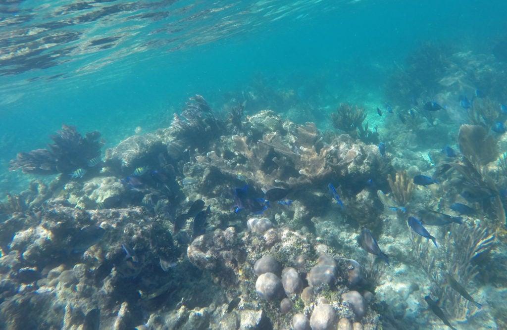 ¡Lancemos un salvavidas a los corales!