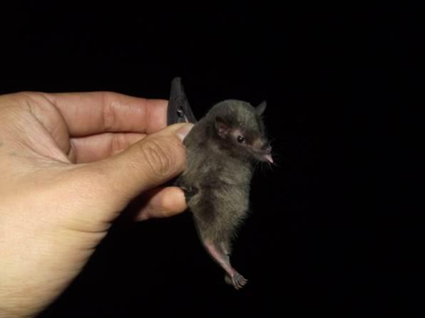 ¿Qué tienen que ver los murciélagos, los ecosistemas de alta montaña, y la adaptación al cambio climático?
