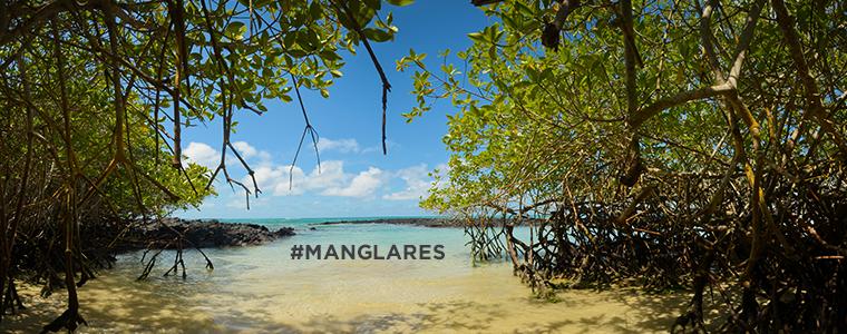 5 superpoderes de los manglares