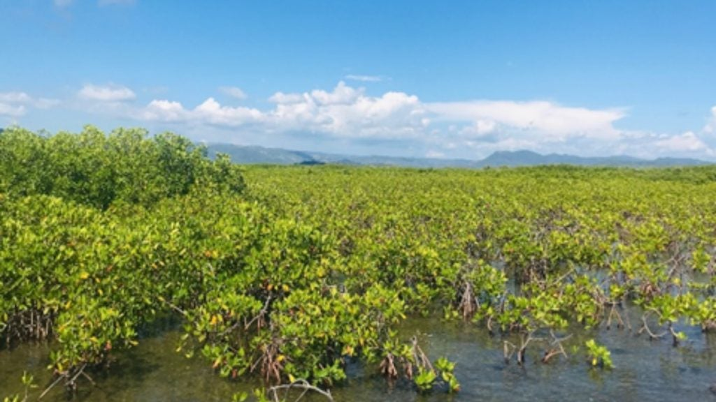 Mangroves, the biological link between environmental protection and economic development