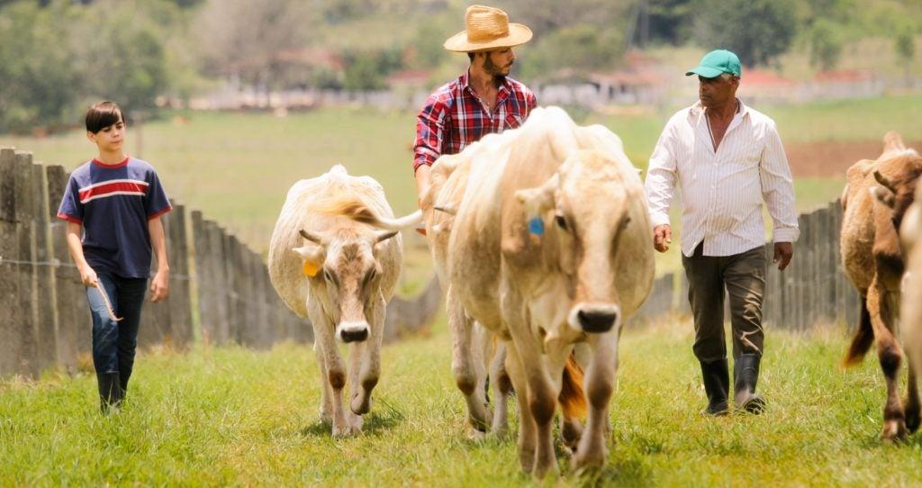 Censo Agropecuario del Paraguay – ¿Qué, quién, dónde y cómo?