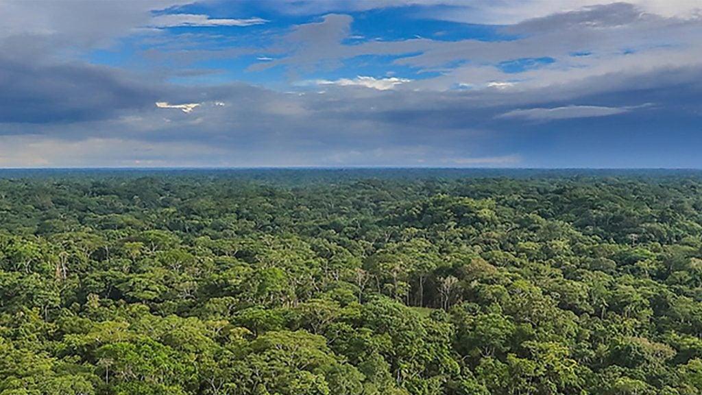 Mejorando vidas en la Amazonia brasileña: planes comunitarios de manejo forestal sustentable generan ingresos y conservan los recursos naturales