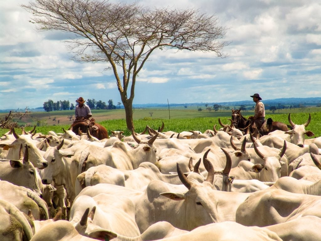 Sustainable livestock farming: the challenge of reducing pollution by increasing productivity