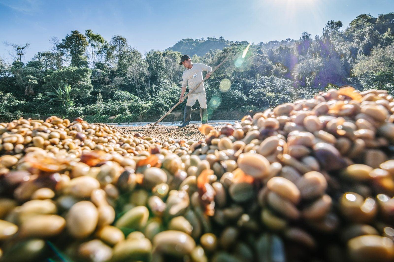Reconectar la agricultura con la naturaleza: las promesas de la agroecología (2nda parte).