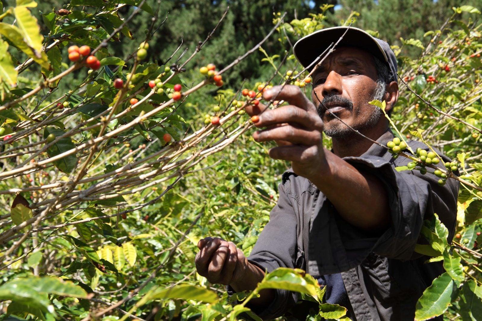 Reconectar la agricultura con la naturaleza: las promesas de la agroecología (1era parte)