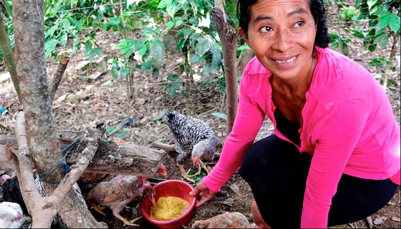 Developing sustainable livelihoods in Guatemala's dry corridor