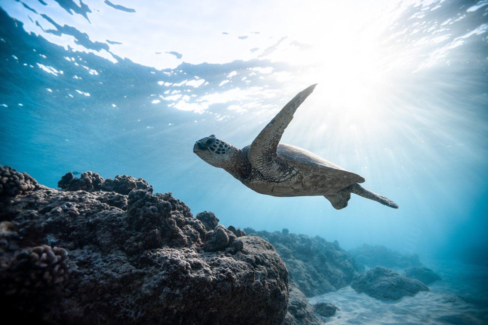 Las soluciones basadas en la naturaleza pueden ayudar a frenar la crisis climática