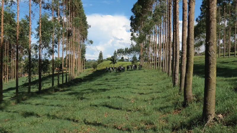 Low-carbon farming in Brazil can benefit farmers and curb climate change